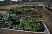 9th Jan 2020 - Vegetable Garden