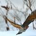 flicker in flight by mjalkotzy