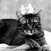 8th Jan 2020 - His Majesty King Toulouse the First