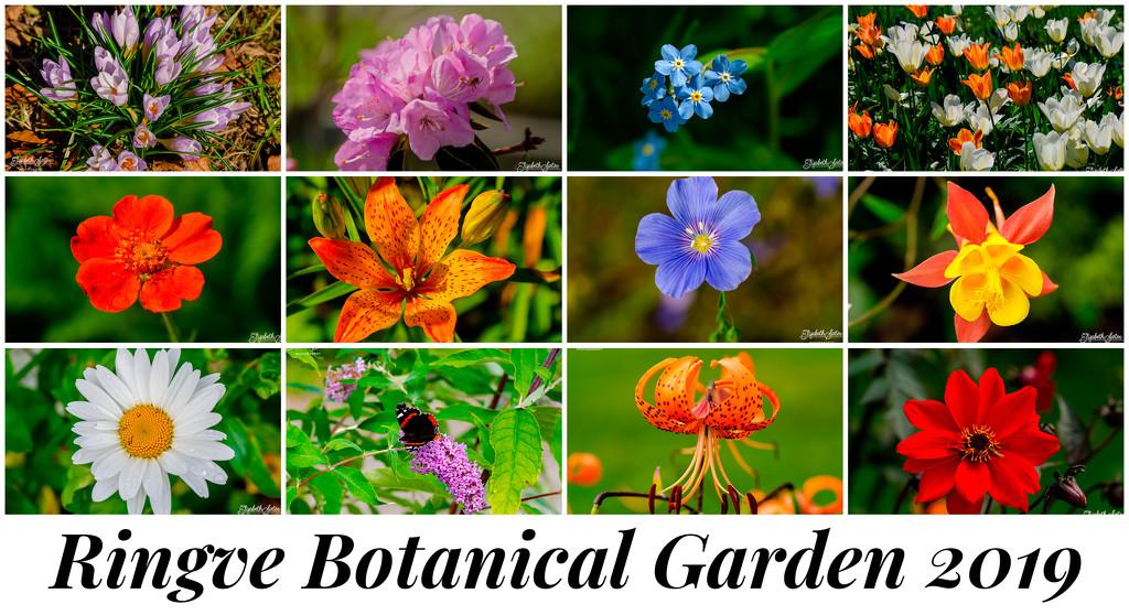 Ringve Botanical Garden 2019 by elisasaeter