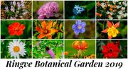 9th Jan 2020 - Ringve Botanical Garden 2019