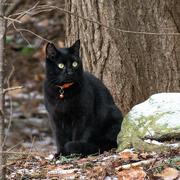 7th Jan 2020 - The black cat