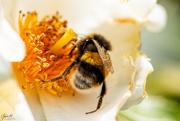 10th Jan 2020 - Bees Bum