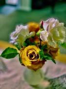 10th Jan 2020 - Focus on roses