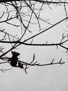 10th Jan 2020 - Winter storm