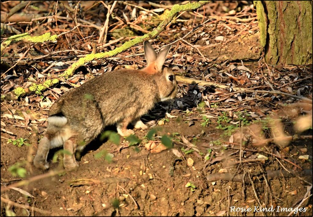 Exploring bunny by rosiekind