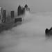 Foggy morning  by stefanotrezzi