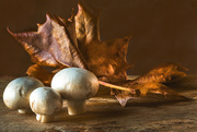 10th Jan 2020 - mushrooms with leaf