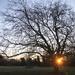 Sunrise in Millenium Wood