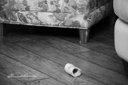 8th Jan 2020 - Family Room Bone Yard