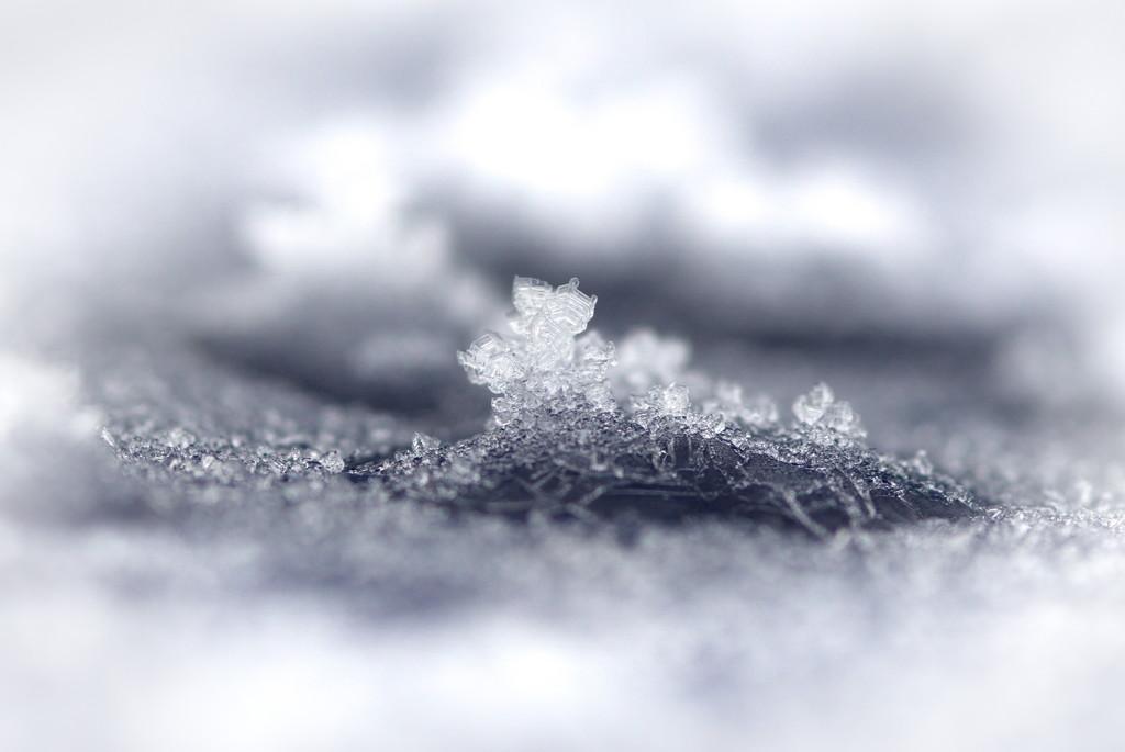 A crown of Ice by teriyakih