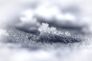 10th Jan 2020 - A crown of Ice