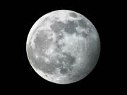 10th Jan 2020 - Wolf Moon