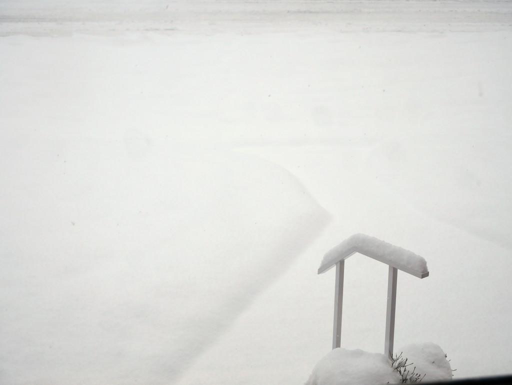 My Snowy Yard by gq