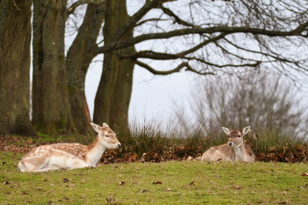 Oh deer, Oh deer! by bizziebeeme