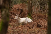 3rd Feb 2020 - Oh deer I've been spotted!