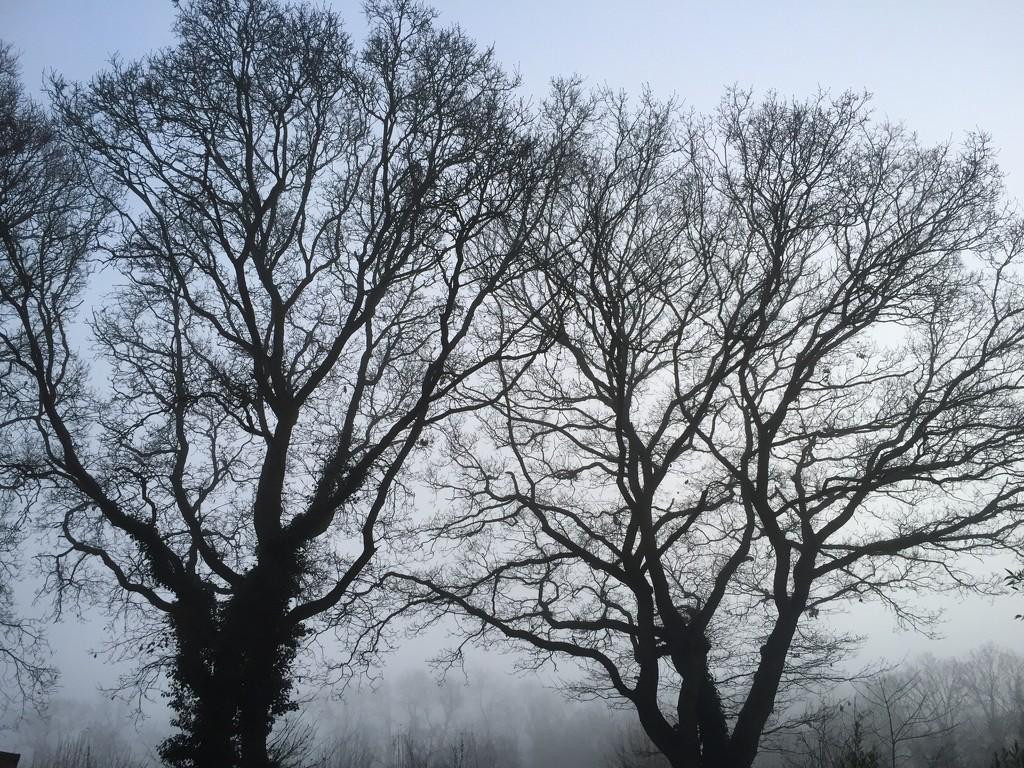 Misty by daffodill