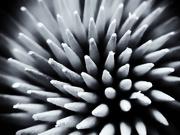 11th Jan 2020 - Sticks