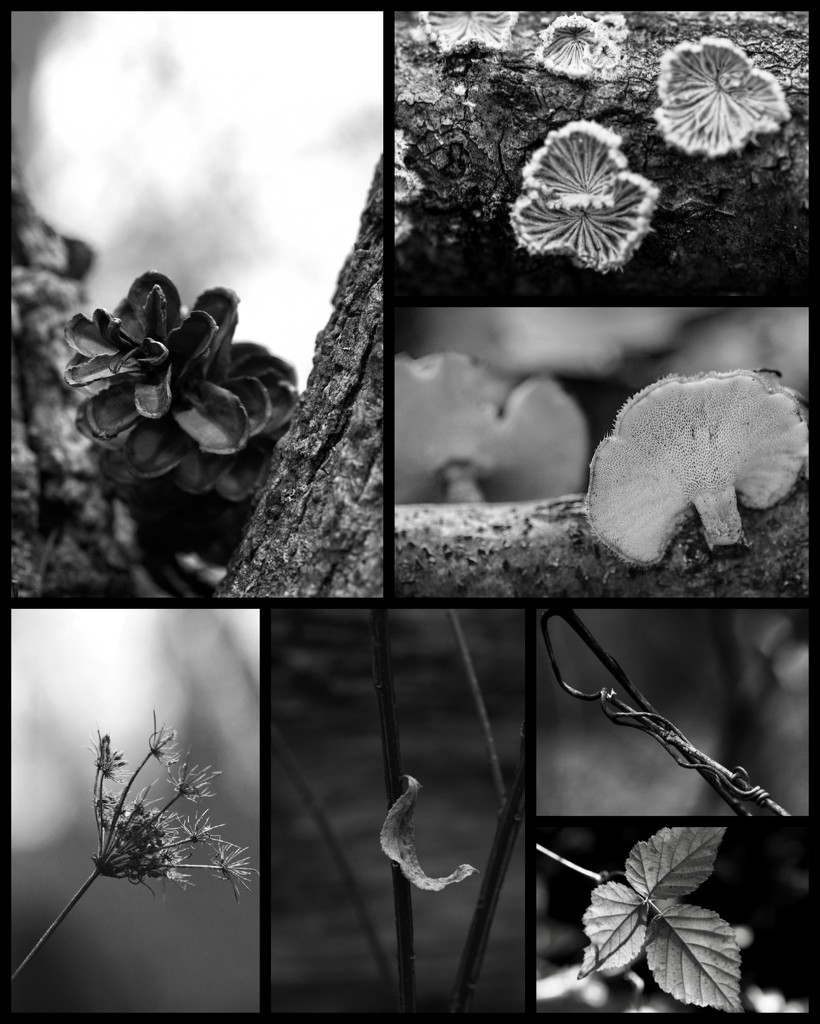 Nature in Black and White  by mzzhope