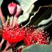 ETSOOI-116 - Gum Flowers