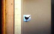 12th Jan 2020 - Bird