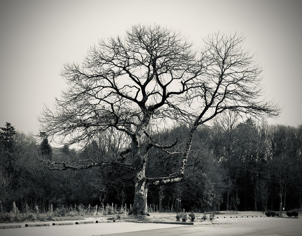 Tree, January 2020 by s4sayer