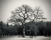 12th Jan 2020 - Tree, January 2020
