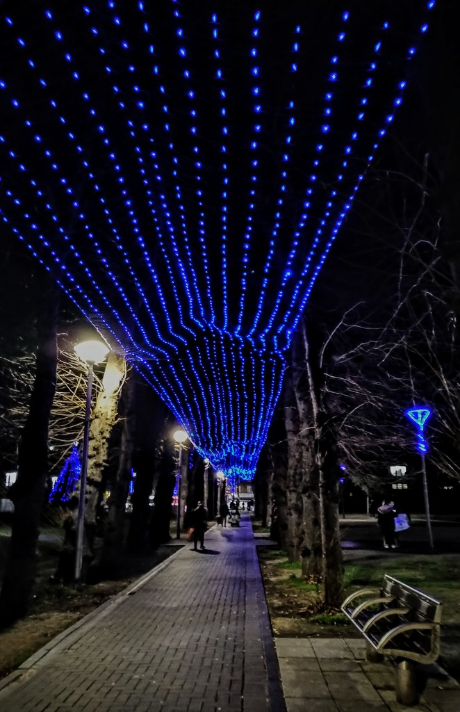 Christmas lights on lime tree walk by boxplayer