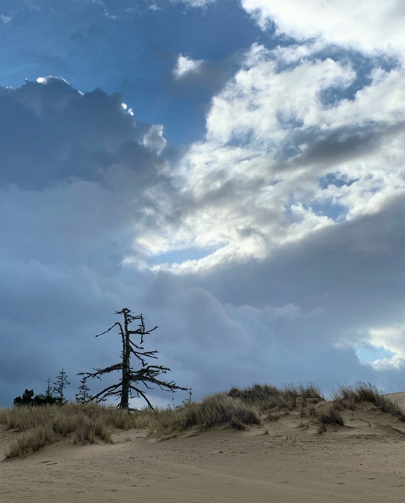 Single lone dead tree by jgpittenger