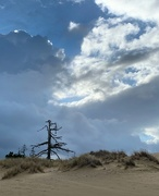 12th Jan 2020 - Single lone dead tree