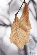 12th Jan 2020 - Leaves
