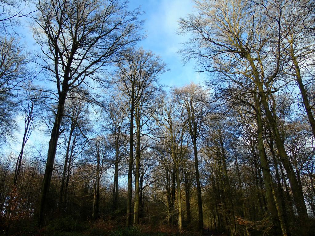 Common Wood by bulldog