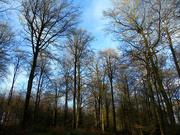 12th Jan 2020 - Common Wood