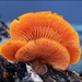 Flashy Fungi