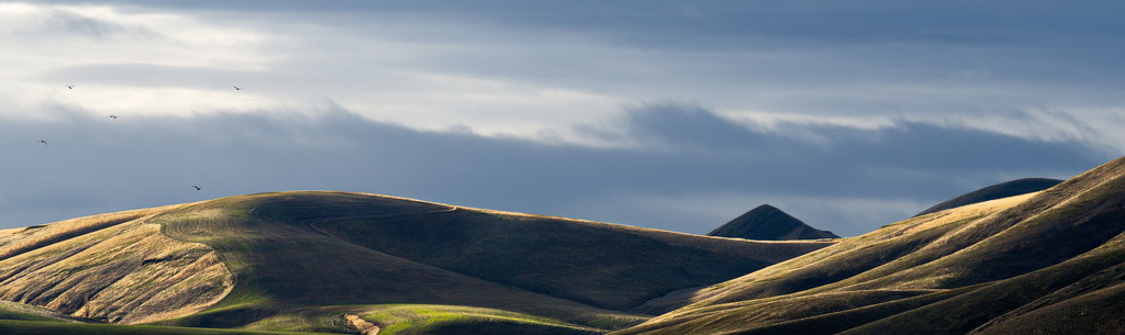 Rolling hills of Wheat by teriyakih
