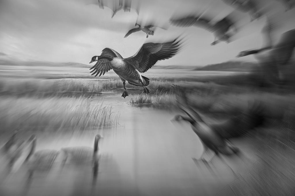 The Landing by farmreporter