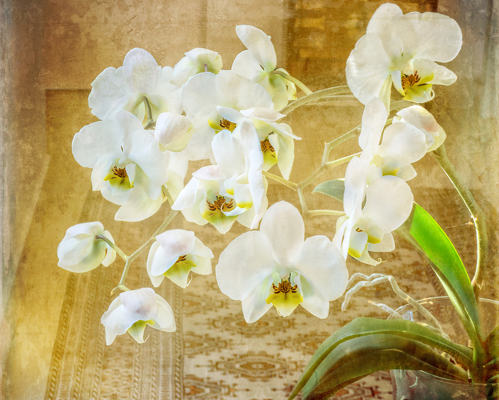 Orchids by ludwigsdiana