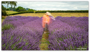 13th Jan 2020 - Always make time to smell the Lavender...