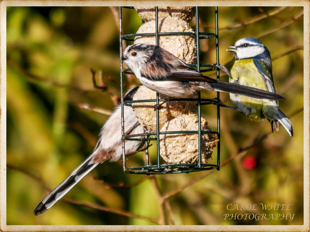 Feathered Friends by carolmw