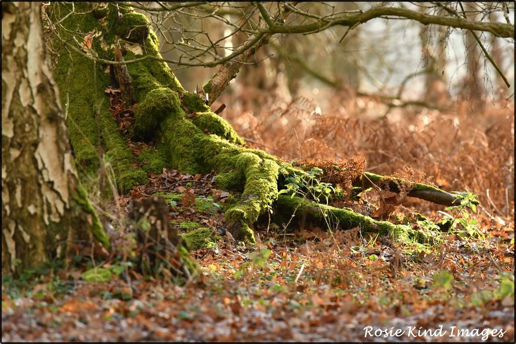 Woodland scene by rosiekind