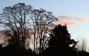 13th Jan 2020 - Sunset Clouds