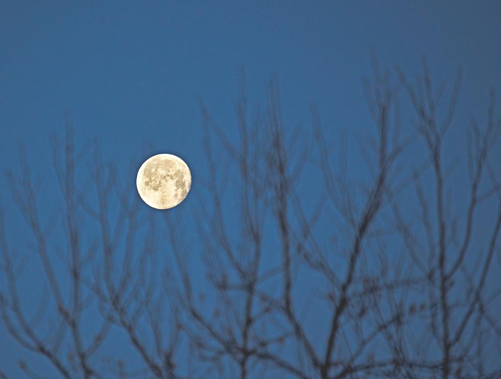 Low Moon by gardencat