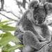 contemplation by koalagardens