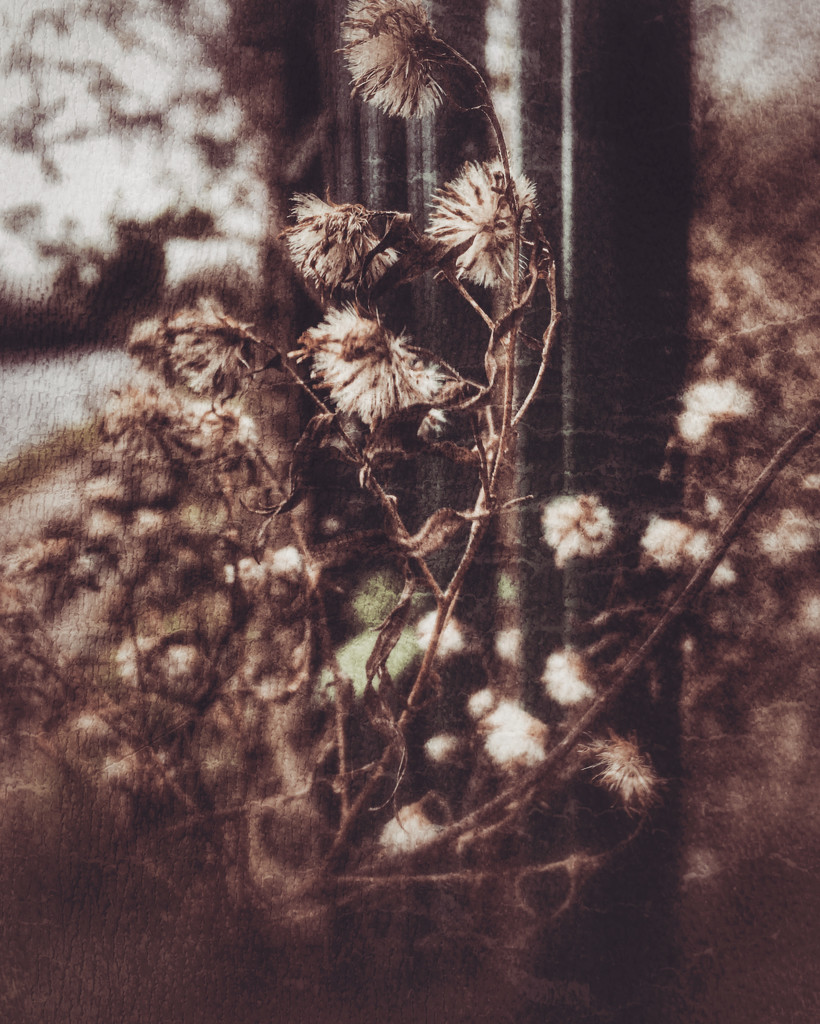 Weeds by rachelwithey