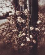 13th Jan 2020 - Weeds
