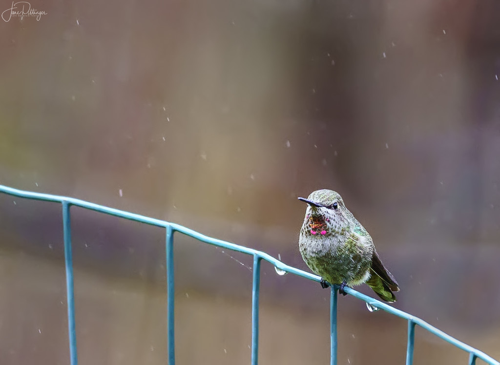 Sitting On the Fence in the Rain by jgpittenger
