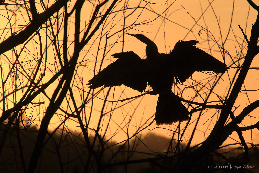 Y11 0113 Silhouette at Sunset by cirasj