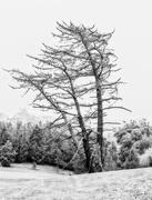 14th Jan 2020 - Lonesome Pine