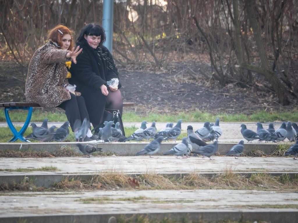 Girls feeding pigeons by haskar