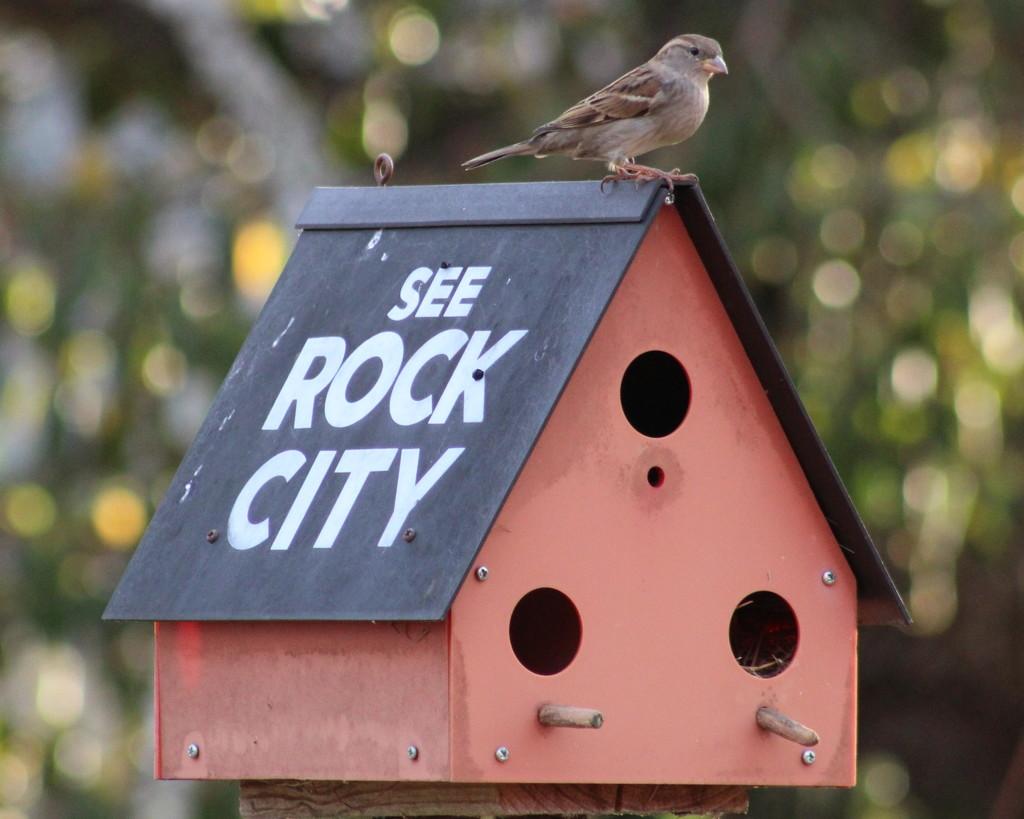 Rock City by cjwhite